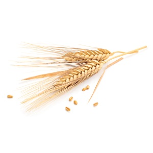 Céramides de blé actif végétal high tech Roig Centella Hydraflore